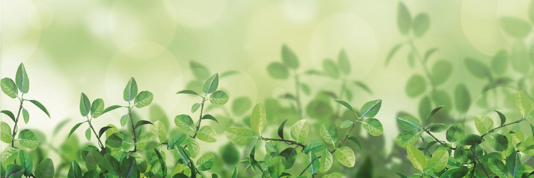 Plantas verdes de hojas pequeñas