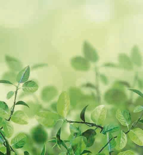 Planta de hojas verdes y pequeñas