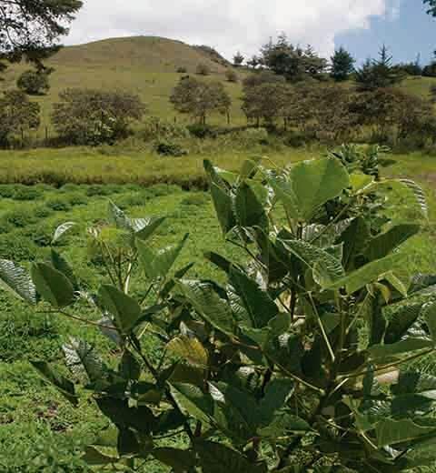 Montaña con arboles y plantas verdes